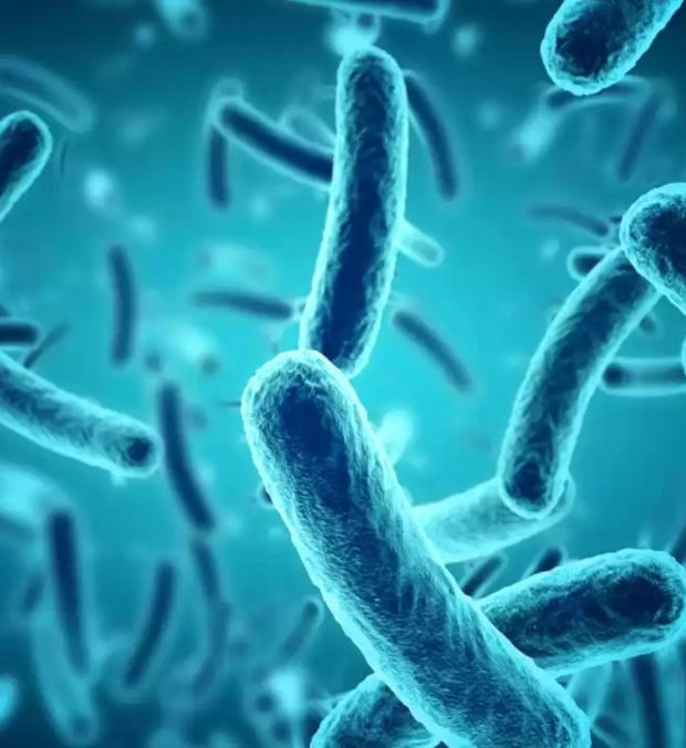 microorganism_world